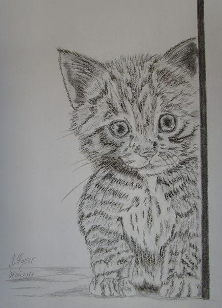 Katzenzeichnung, Zeichnung, Neugier, Katze, Bleistiftzeichnung, Haus