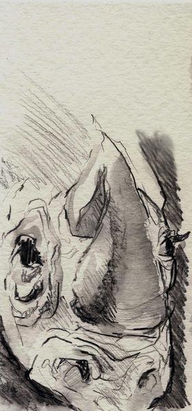 Zeichnung, Studie, Tiere, Skizze, Bleistiftzeichnung, Nashorn