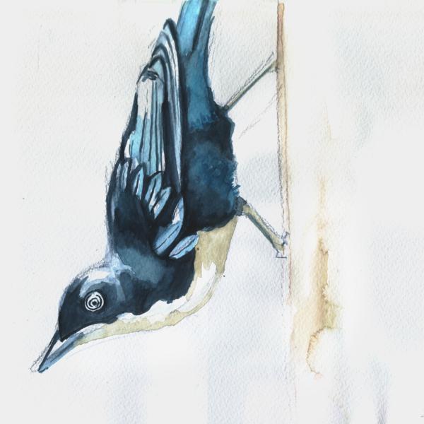 Vogel, Tiere, Aquarellmalerei, Blau, Aquarell