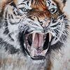 Katze, Tiere, Großkatze, Tiger