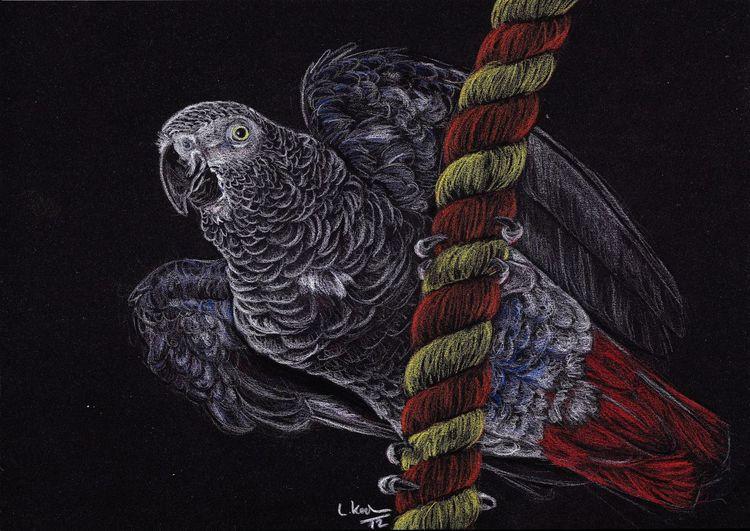 Vogel, Papagei graupapagei, Zeichnungen