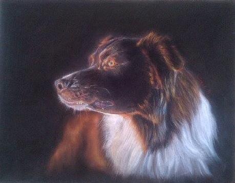 Kreide, Pastellmalerei, Hund, Zeichnungen