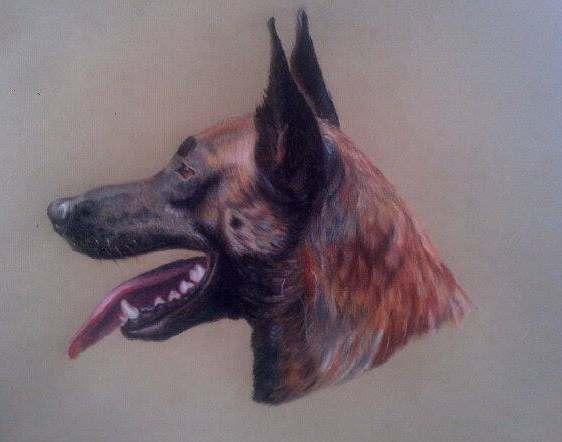 Tiere, Naturalistisch, Hund, Zeichnungen