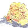 Wasser, Fisch, Flosse, Zeichnungen