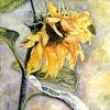Blumen, Herbst, Sonne, Aquarell