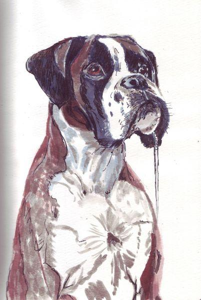 Hund, Boxer, Spucke, Zeichnungen, Inktober