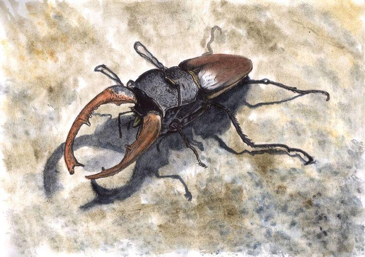 Hirschkäfer, Bein, Tiere, Käfer, Mischtechnik