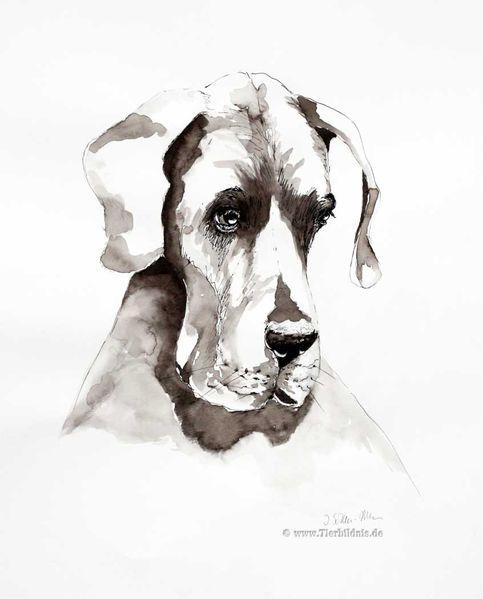Studie, Zeichnung aquarell, Reduktion, Monochromes aquarell, Ausdruck, Hund