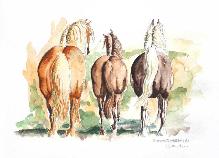 Pferdeaquarell, Kaltblüter, Aquarellmalerei, Tierstudie, Pferdehintern, Hinteransicht