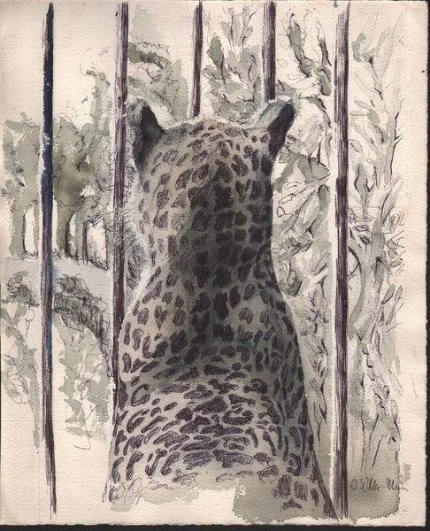 Zeichnung, Tierportrait, Leopard, Studie, Grafit, Katze