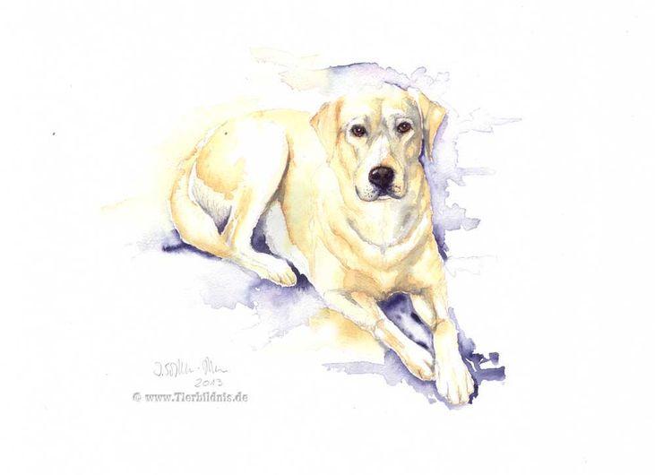 Hundezeichnung, Freundlicher hund, Goldenretriever, Gemälde, Hundeportrait, Haustier
