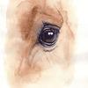 Vollblut, Pferdeauge, Augenausdruck, Pferdeportrait