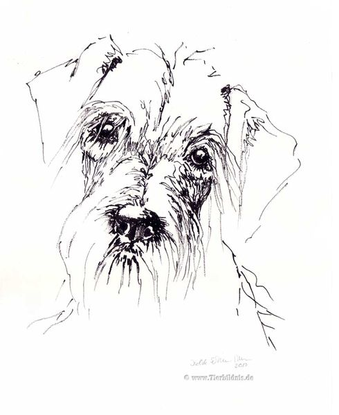 Hundeportrait, Naturalismus, Dackel, Tuschezeichnung, Ausdruck, Rauhhaardackel
