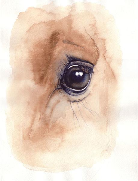 Vollblut, Pferdeauge, Augenausdruck, Pferdeportrait, Pferde, Ausdruck