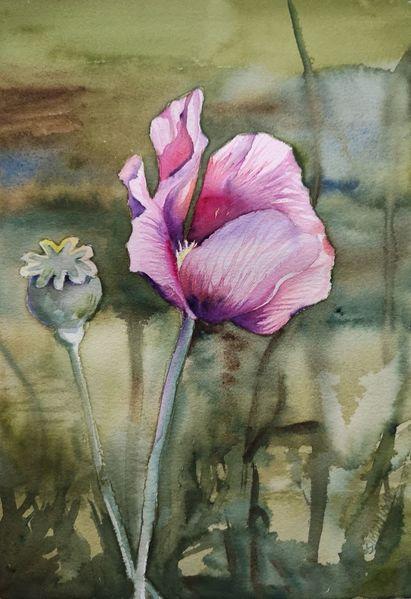 Blüte, Wiese, Mohn, Aquarell