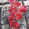 Rose, Spalier, Rot, Malerei