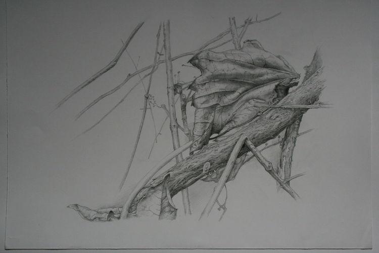 Zeichnungen, Zeichnen, Pflanzen