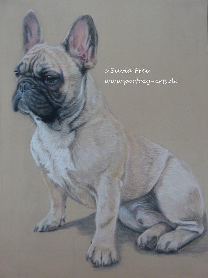 Bullyportrait Hundezeichnung Tiere Bulldogge Französische