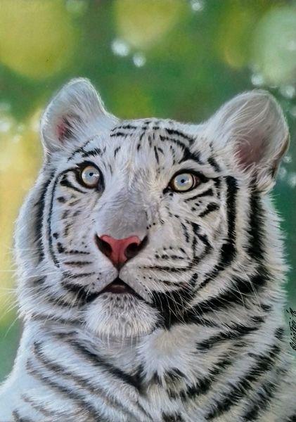 Tigerzeichnung, Katze, Tierzeichnung, Tiger, Raubtier, Tiere