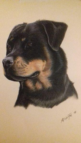 Tierzeichnung, Hundeportrait, Hund, Tierportrait, Haustier, Rottweiler