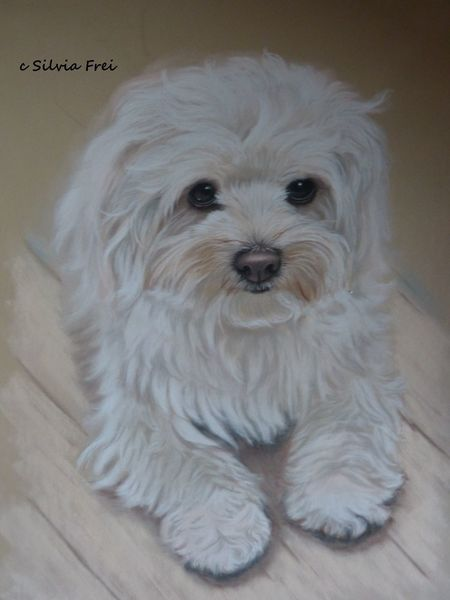 Tierportrait, Zeichnung, Pastellmalerei, Hundeportrait, Hund, Portrait