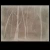 Nacht, Grußelig, Wald, Baum