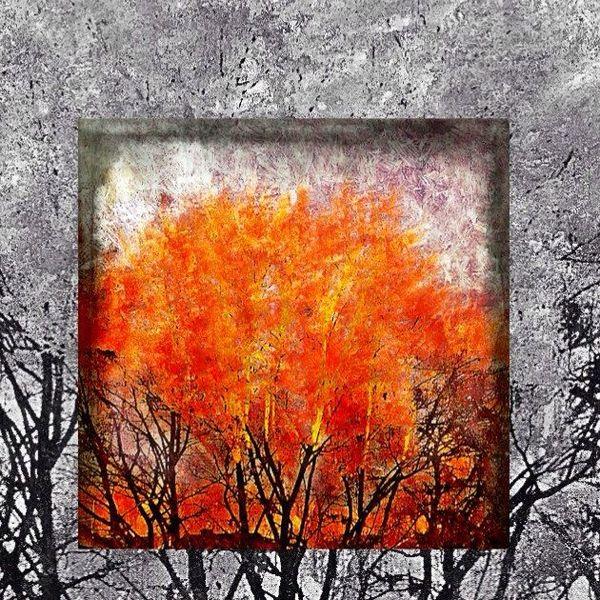 Baum, Plakatkunst, Schwarz, Orange, Fotografie,