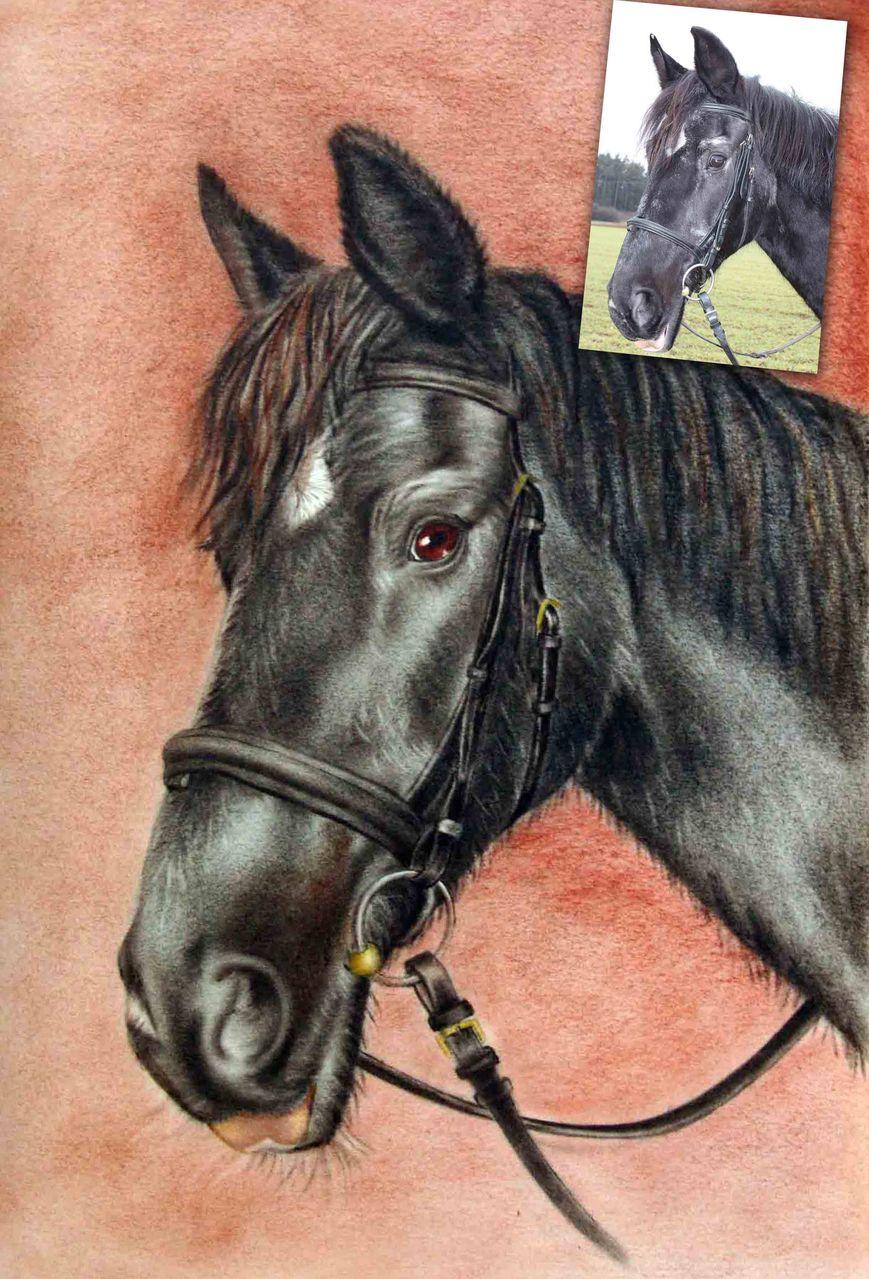 bild pferd malen zeichnen fotografie von stefan pabst bei kunstnet. Black Bedroom Furniture Sets. Home Design Ideas