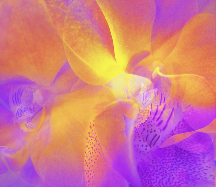 Orchidee, Emotion, Farben, Blumen, Fotomontage, Fotografie