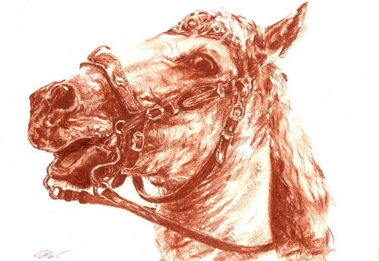 Rötel, Sepia, Pferde, Zeichnung, Zeichnungen