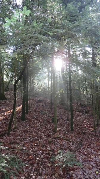 Besinnlichkeit, Reiz, Traumwelt, Fotografie, Wald