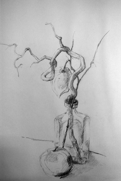 Schwarz weiß, Äste, Zeichnung, Apfel, Bleistiftzeichnung, Zeichnungen
