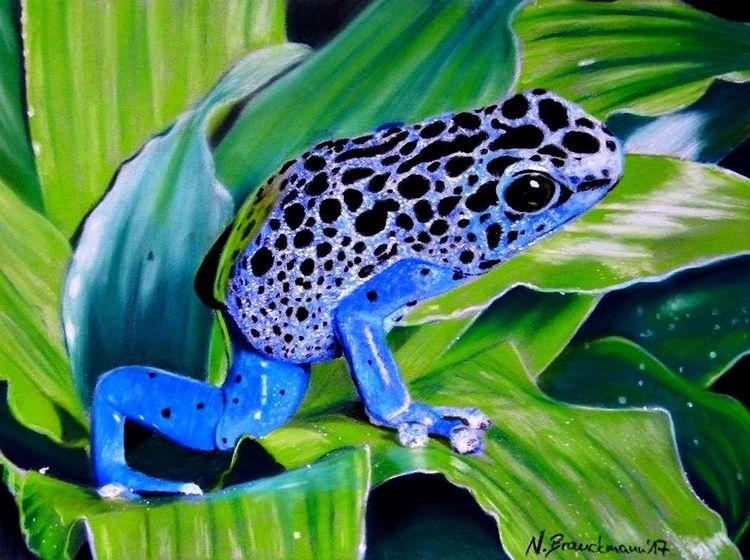 Frosch, Natur, Pastellmalerei, Blätter, Blau, Zeichnung
