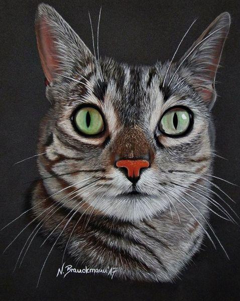 Katzenaugen, Katzenportrait, Pastellmalerei, Realismus, Tiere, Katze