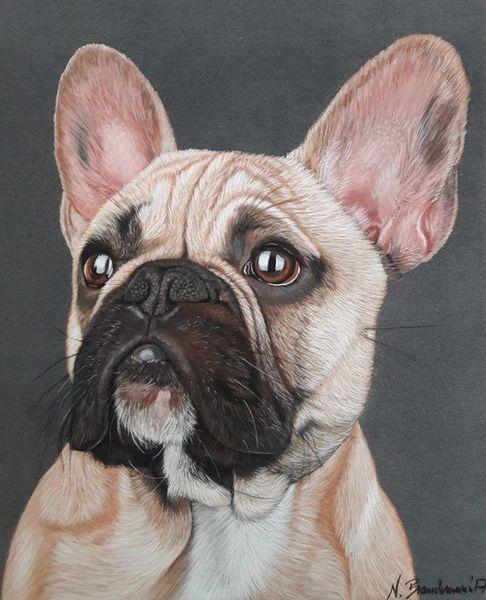 Tiere, Hundeportrait, Bully, Hund, Realismus, Französische bulldogge