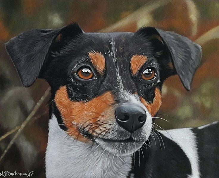 Pastellmalerei, Hund, Hundeportrait, Hundekopf, Hundezeichnung, Zeichnungen