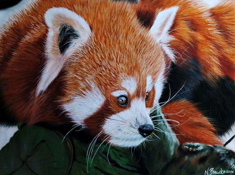 Pastellmalerei, Tiere, Realismus, Roter panda, Wildtier, Panda