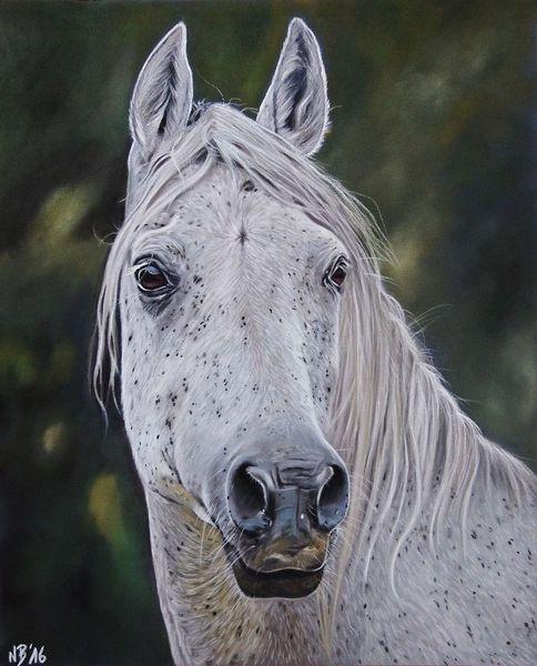 Stute, Tiere, Reiten, Pferde, Pastellmalerei, Tierzeichnung