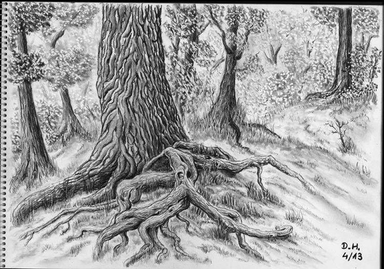 Wurzelbaum, Bleistiftzeichnung, Zeichnung, Zeichnungen