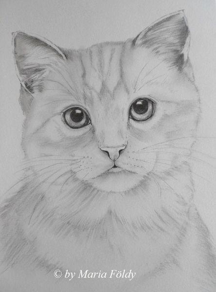 Zeichnungen, Tiere