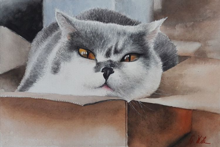 Katze, Karton, Tiere, Haustier, Aquarell
