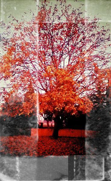 Fotografie, Blätter, Farben, Herbst