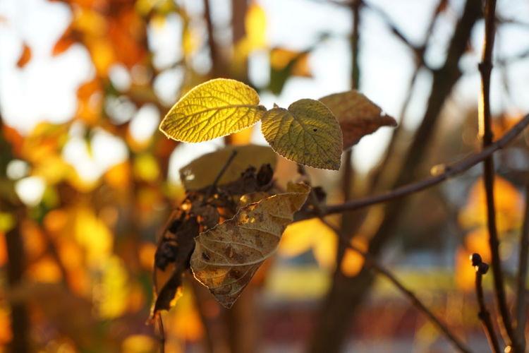 Glühen, Herbst, Dämmerung, Laub, Fotografie