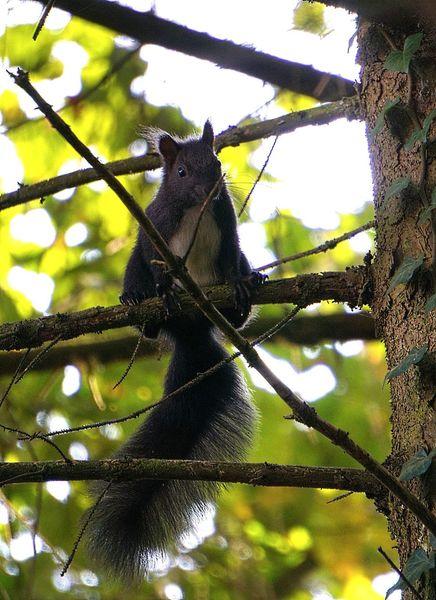 Eichhörnchen, Baum, Äste, Fotografie, Blitz, Schnell