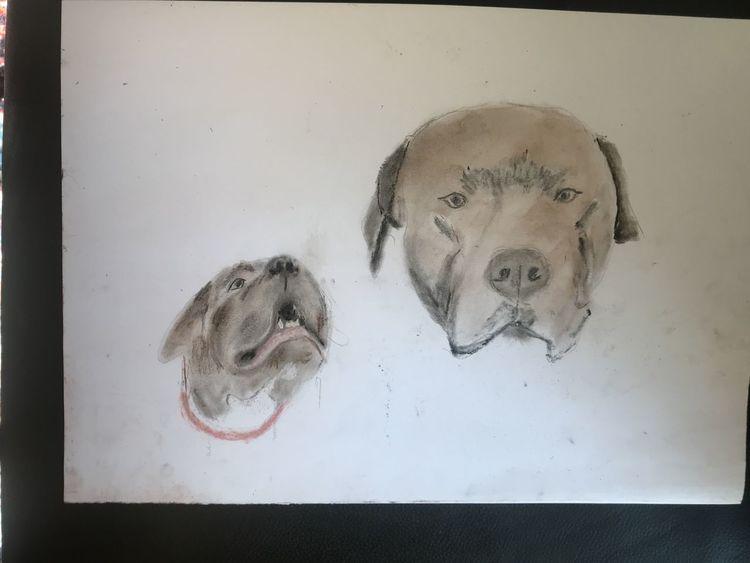 Portrait, Hund, Pastellmalerei, Kreide, Zeichnungen
