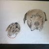 Portrait, Hund, Pastellmalerei, Kreide