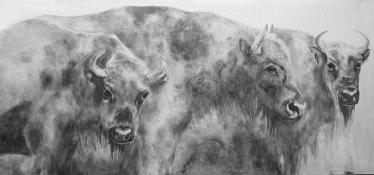 Tiere, Bleistiftzeichnung, Grafit, Zeichnungen