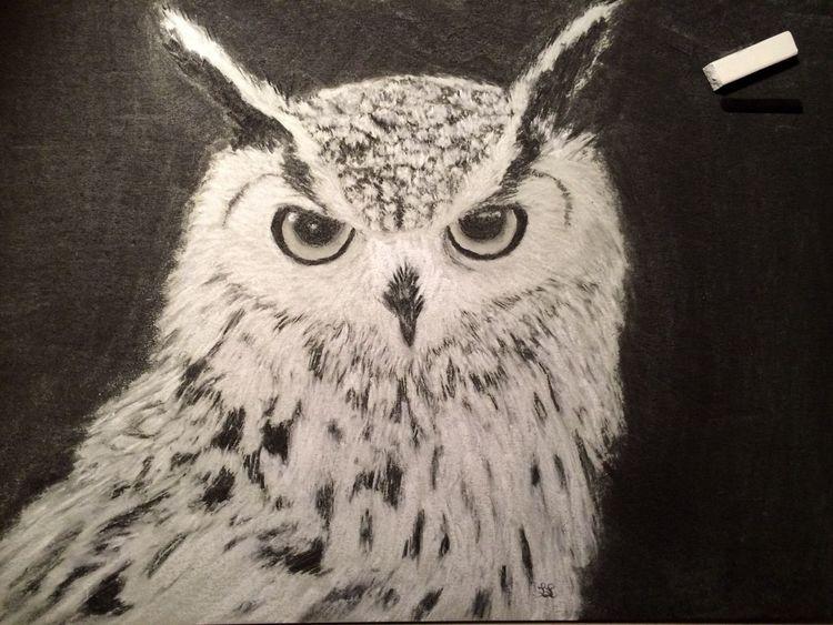 Tiere, Zeichenkohle, Schneeeule, Tafelkreide, Feder, Zeichnung