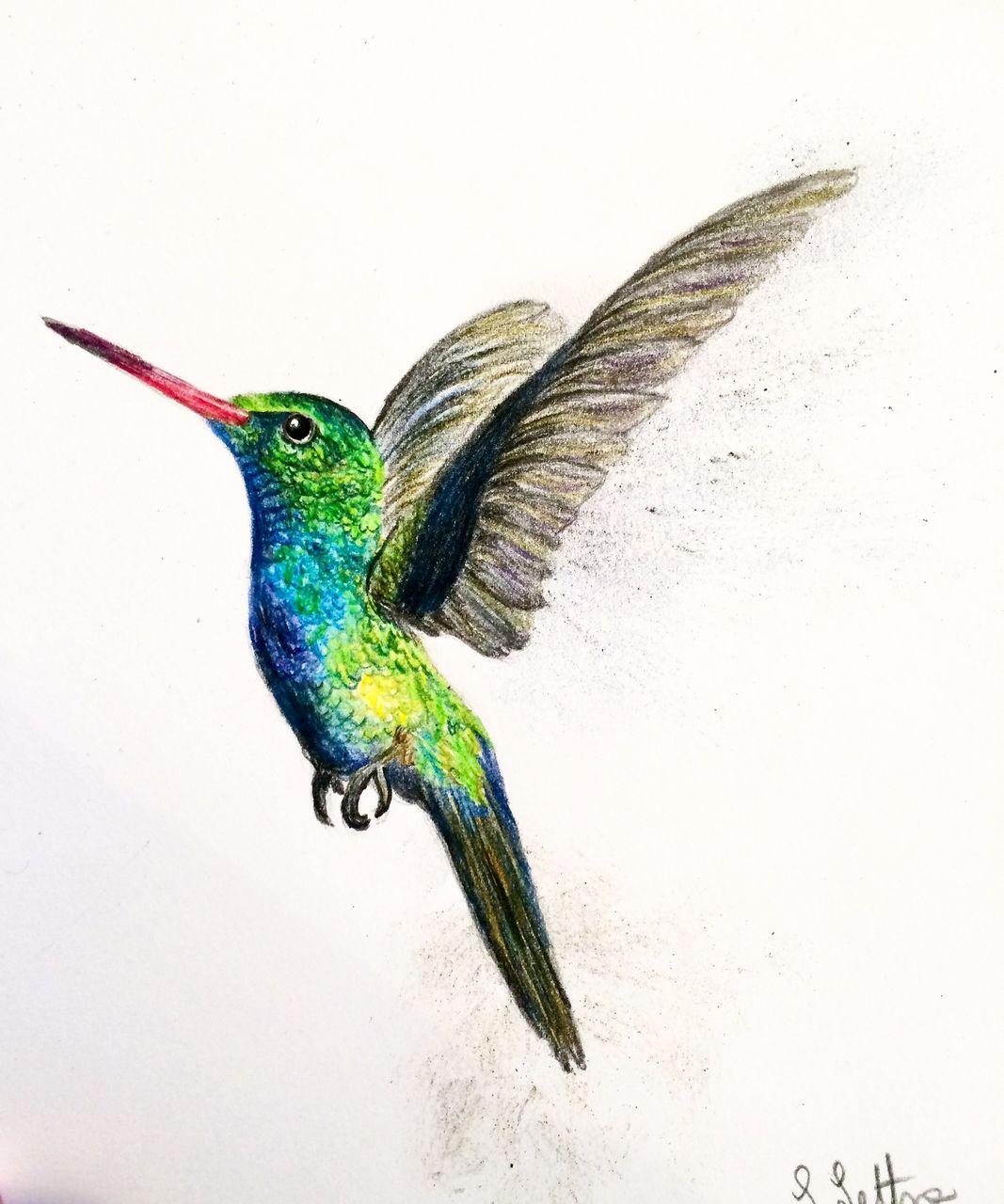 Bild Kolibri Tier Vogel Farbstifte Von Elefantenfuss
