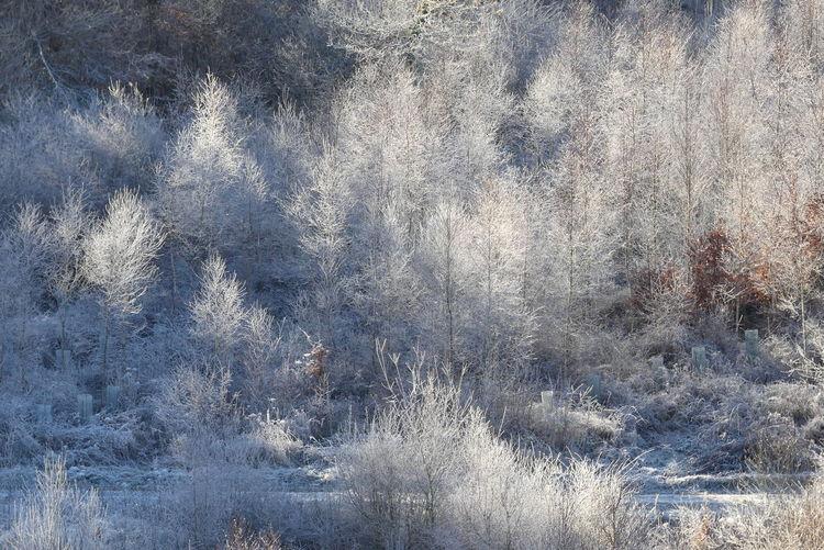 Kalt, Winter, Frost, Weiß, Rauhreif, Baum